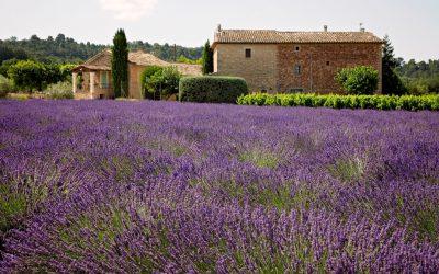 Qu'est-ce qui rend les produits de Provence unique ?